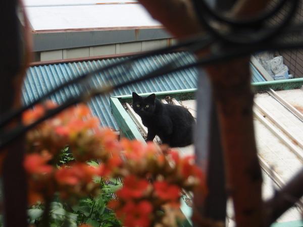 黒猫りきゅう起床.JPG